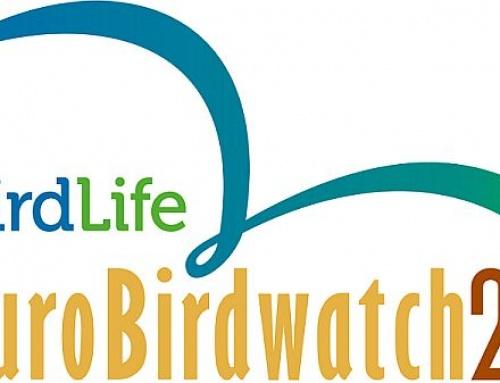 Evropski vikend posmatranja ptica i vrste koje možete videti na Paliću i Ludašu