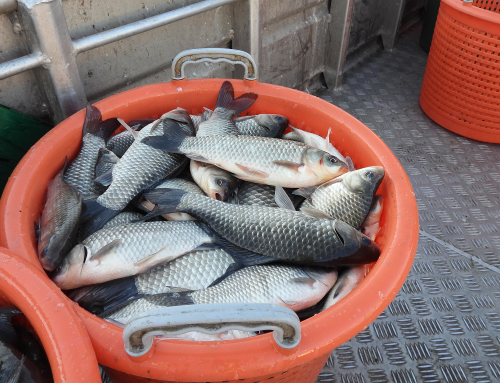 Produžava se kampanja selektivnog izlova ribe