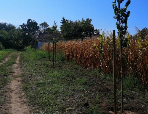 Nastavlja se sadnja zaštitnog pojasa zelenila jezera Palić i Ludaš